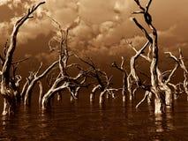 Tote Bäume Stockbilder