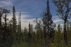 Tote Bäume stockfotografie