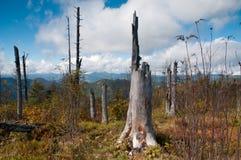 Tote Bäume auf einem Gipfel Stockbilder