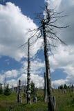Tote Bäume in den Bergen lizenzfreie stockfotografie