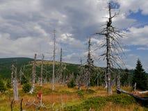 Tote Bäume in den riesigen Bergen Lizenzfreie Stockfotos