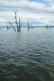 Tote Bäume, die aus dem Wasser heraus am See Kariba haften Lizenzfreie Stockfotografie