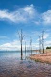 Tote Bäume, die aus dem Wasser heraus am See Kariba haften Stockbild