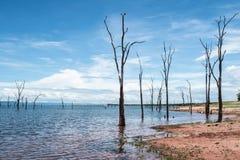 Tote Bäume, die aus dem Wasser heraus am See Kariba haften Stockfotos