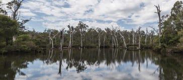 Tote Bäume, die schöne Reflexionen auf dem Wasser bereitstellen Stockbilder