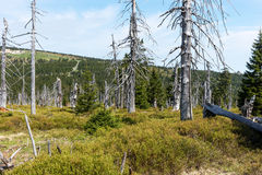 Tote Bäume - Effekt der Umweltverschmutzung stockfotografie