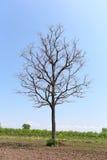 Tote Bäume im Ackerland Stockfotos