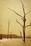 Tote Bäume im See lizenzfreie stockbilder