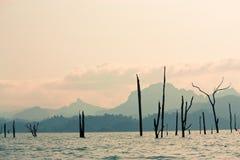 Tote Bäume im See stockfotos
