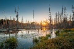 Tote Bäume im See Lizenzfreies Stockfoto