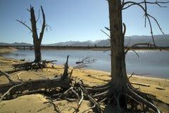 Tote Bäume im trockenen Reservoir Stockbild