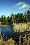 Tote Bäume innerhalb des seichten Wassers Stockfotografie