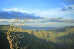Tote Bäume mit Bergblicken stockbild