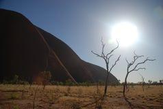 Tote Bäume an Uluru/an Ayers-Felsen Lizenzfreies Stockfoto