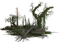 Tote Bäume und Anlagen Lizenzfreies Stockbild