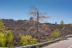 Tote Bäume und ein Lavafluss nahe Vulkan Ätna auf Sizilien Stockbilder