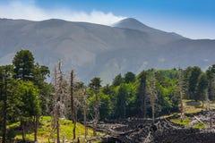 Tote Bäume und ein Lavafluss nahe Vulkan Ätna auf Sizilien Stockfotos