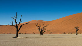 Tote Bäume und rote Sanddünen Stockfotografie