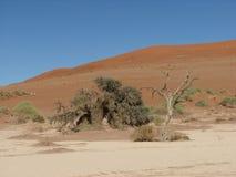 Tote Bäume und rote Sanddünen Sossusvlei stockfoto