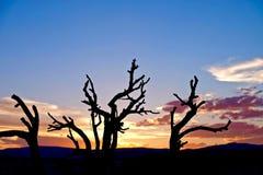 Tote Baum-Schattenbilder auf Sonnenuntergang-Himmel Lizenzfreies Stockfoto