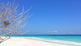 Tote Baumaste auf unscharfem weißem Sandstrand mit klarem blauem Himmel Lizenzfreies Stockbild