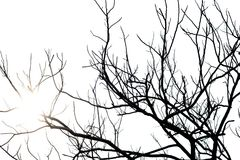 Tote Baumaste des Schattenbildes mit Himmelhintergrund Lizenzfreie Stockfotos
