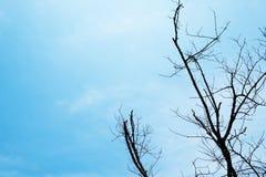 Tote Baumaste des Schattenbildes mit Hintergrund des blauen Himmels Stockbilder