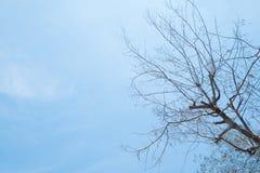 Tote Baumaste des Schattenbildes mit Hintergrund des blauen Himmels Stockfotos