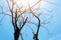 Tote Baumaste des Schattenbildes mit Hintergrund des blauen Himmels Stockfoto