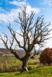 Tote Baumaste im Bauernhof Lizenzfreie Stockbilder
