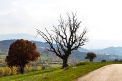 Tote Baumaste im Bauernhof Stockfotografie