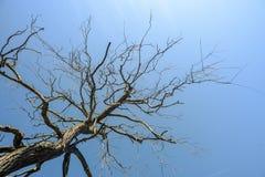 Tote Baumaste und blauer Himmel Lizenzfreie Stockfotografie