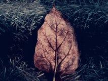 tote Baumblätter lizenzfreie stockfotografie