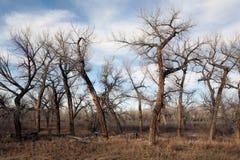 Tote Baumlandschaft Lizenzfreies Stockbild