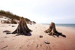 Tote Baumstämme in Nationalpark Slowinski Stockfotografie