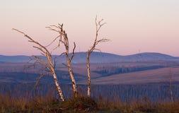 Tote Birke bei Sonnenaufgang Lizenzfreies Stockbild