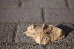 Tote Blätter Lizenzfreie Stockfotografie
