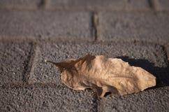 Tote Blätter Lizenzfreies Stockbild