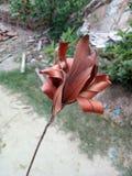 Tote Blätter stockfotos