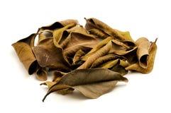 Tote Blätter Stockbilder