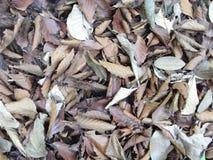 Tote Blätter stockbild