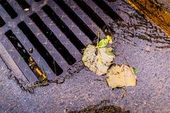 Tote Blätter auf der Straße nahe bei einem Sturm-Abfluss Stockfotografie