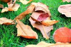 Tote Blätter auf Gras Stockbild