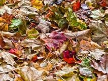 Tote Blätter aus den Grund Stockfotos