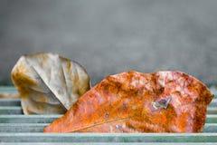 Tote Blätter, die in Gitter-Kanaldeckel fallen Stockfoto