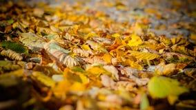 Tote Blätter 1 stockfoto