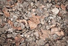 Tote Blätter für Hintergründe und Beschaffenheiten Stockfotografie
