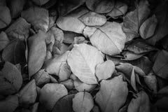 Tote Blätter für Hintergründe und Beschaffenheiten, Schwarzweiss-Ton Lizenzfreie Stockfotos