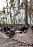 Tote Blätter und der schmutzige Boden Stockfoto