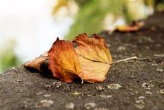 Tote Blätter Lizenzfreie Stockfotos